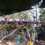 image ak20153231-jpg